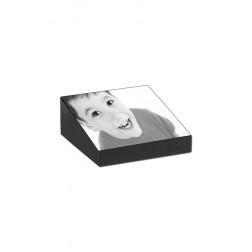 gedenksteen marlin met lasergravure FBMM1AL